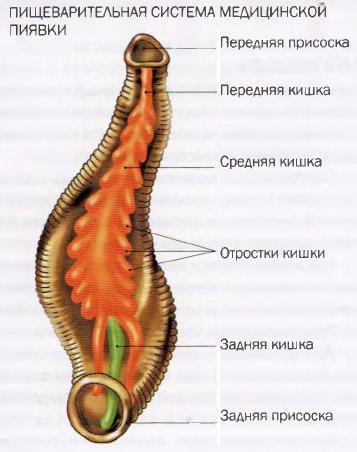 Самые читаемые статьи: Народные средства лечения при варикозе