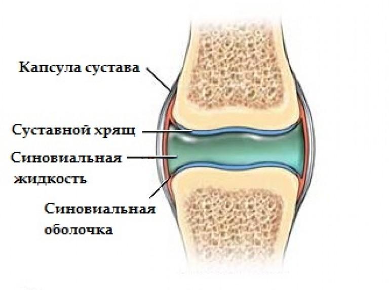коленный сустав синовиальная жидкость выработка