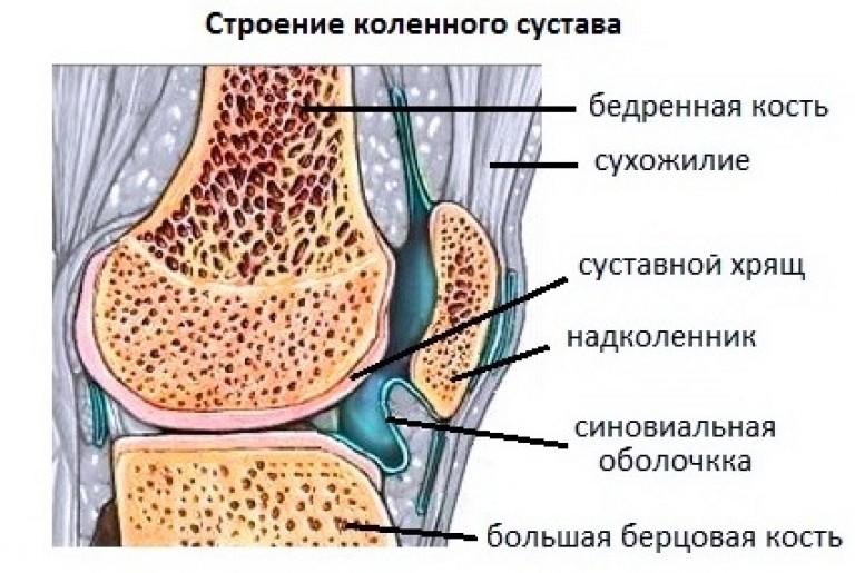 у коленного сустава болит с внутренней стороны что это может быть