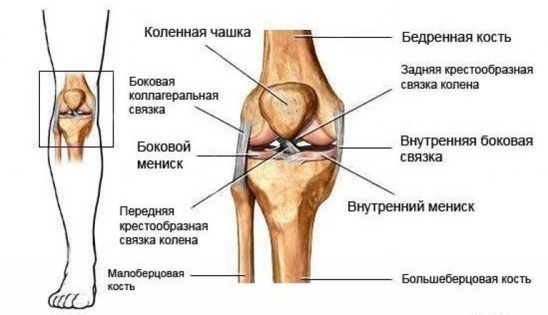 трехмерное изображение коленного сустава