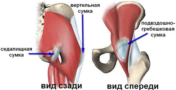 Как выглядит тазобедренный сустав