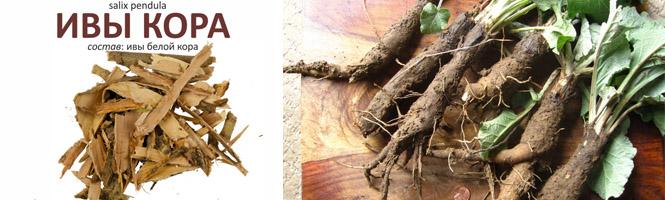 Отвары коры ивы и корня лопуха