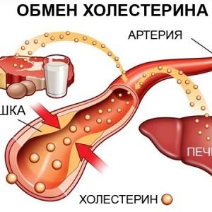 Вред холестирина